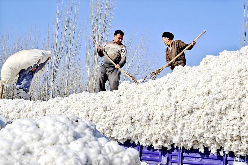 """""""棉改""""一年,新疆棉花产业迎转型"""
